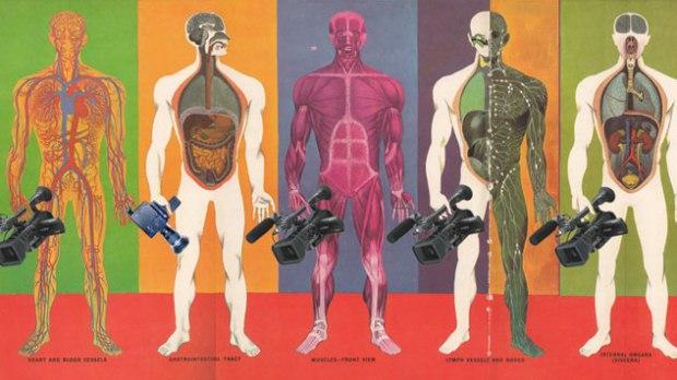 ciclo_anatomia_normalidad_th